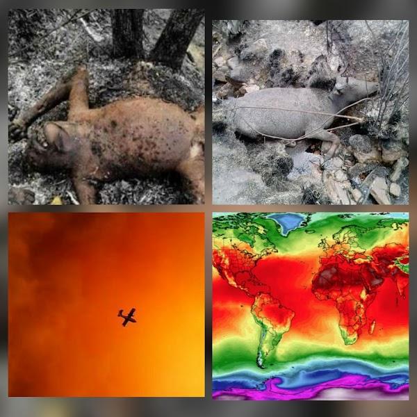 PREOCUPANTE: incendios forestales por todo el planeta tierra.