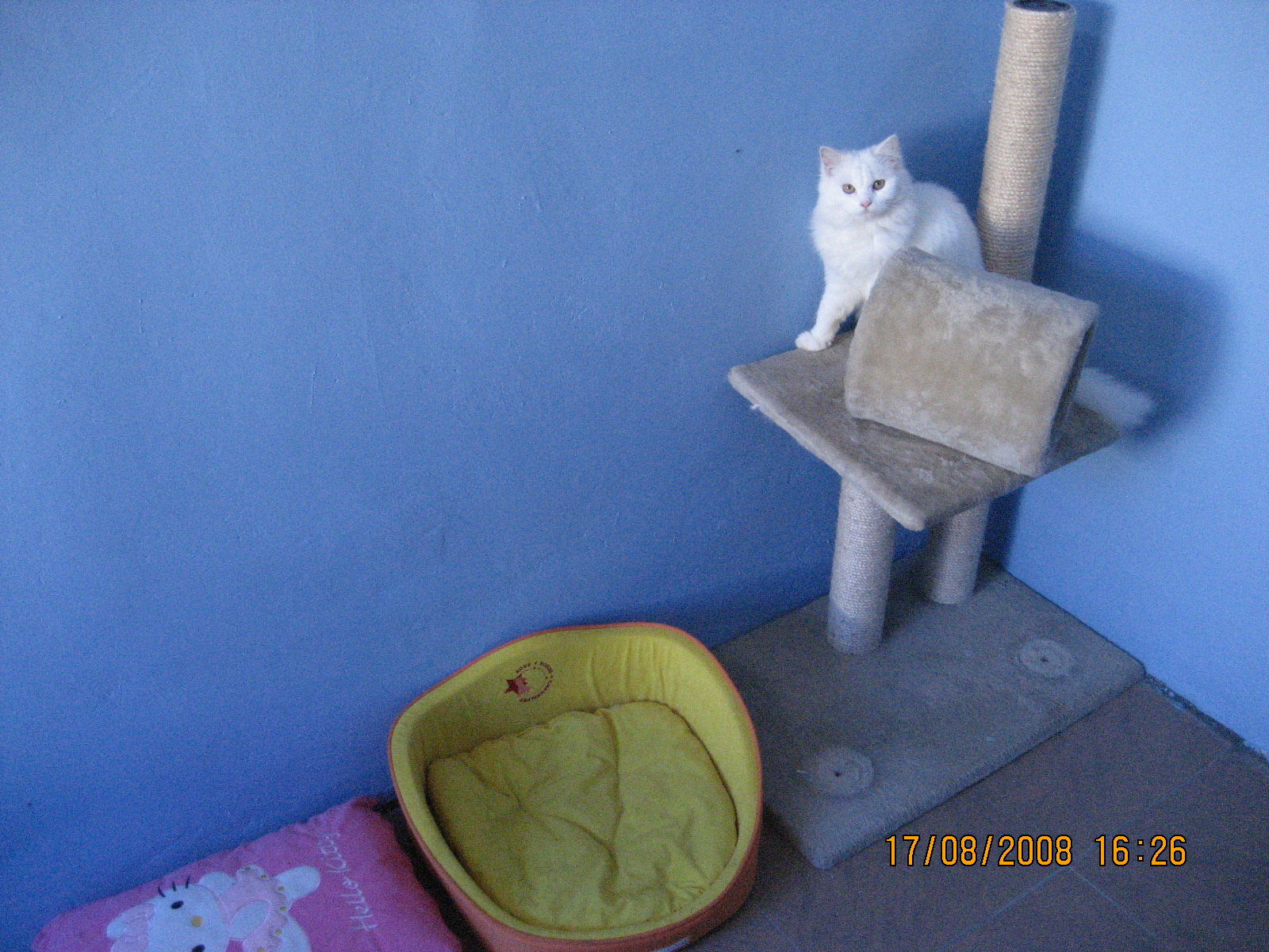 Kittycare Haven Cat Boarding Amp International Pet Cat