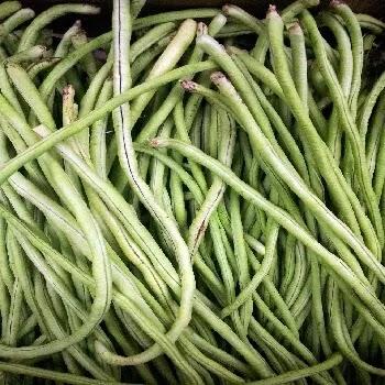 श्रावण घेवडा, French beans vegetables name in Marathi