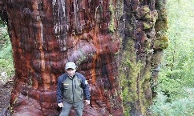 Alerce Costero National Park
