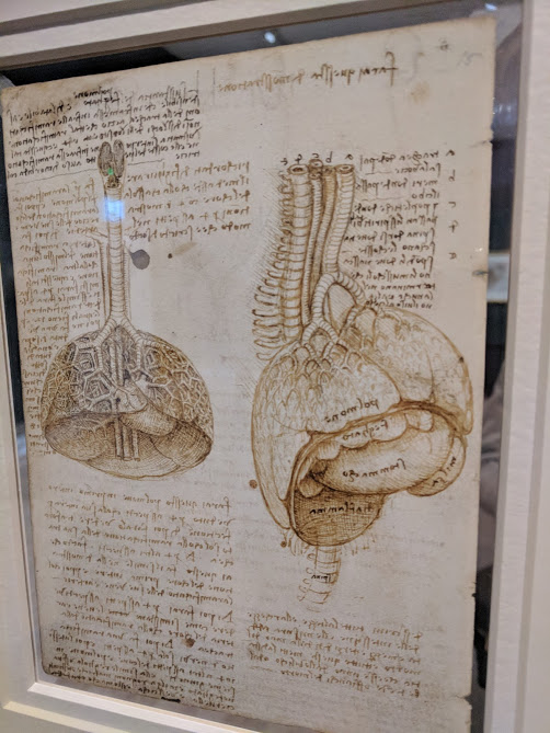 drawing of the lungs by Leonardo da vinci
