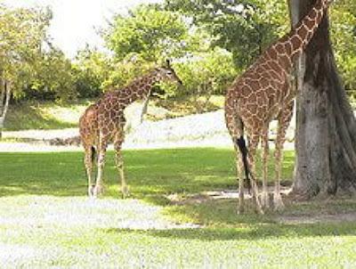 Miami Metro Zoo in Miami Florida