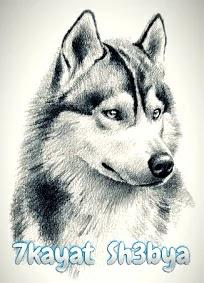 قصة عن وفاء الكلاب للاطفال