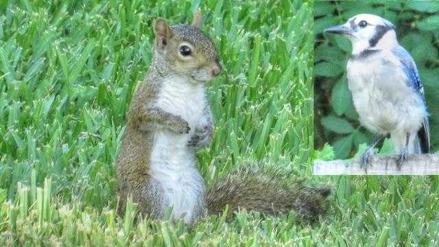 Blue Jays Prank Squirrels