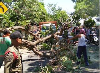 Angin Kencang Sebabkan Pohon di Jalan Hayam Wuruk Tumbang