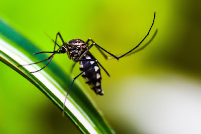 come-proteggere-casa-dagli-insetti