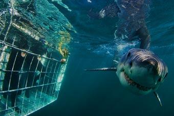 adrenalina: 3 modi per immergersi con lo squalo