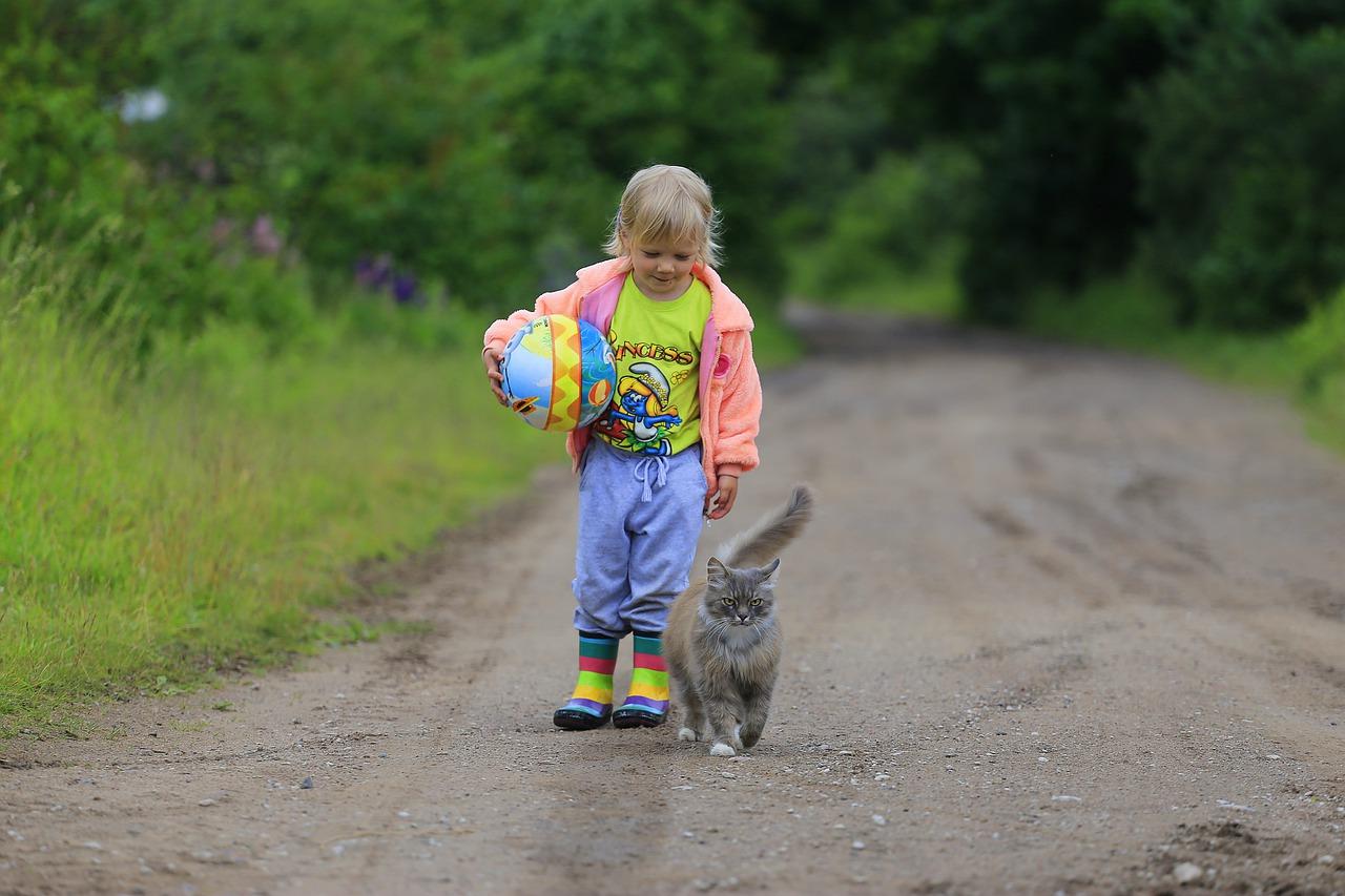 Le langage des chats et le comportement félin
