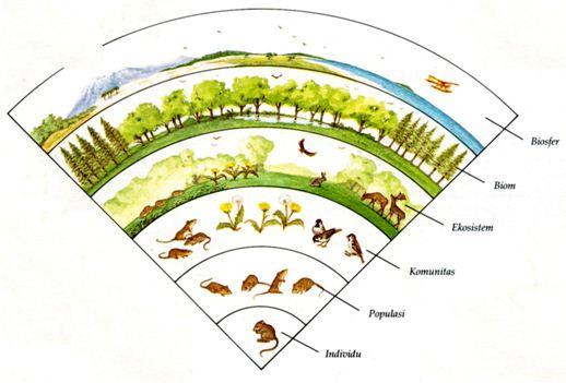 Tingkatan Ekosistem