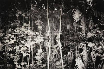 Waniku  exposición fotográfica de Andrea Santolaya, fotografía Cortesia Galería Freites