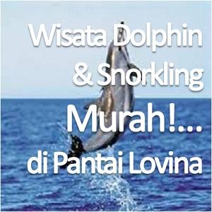 Paket Wisata Dolphin dan Snorkling Murah di Pantai Lovina