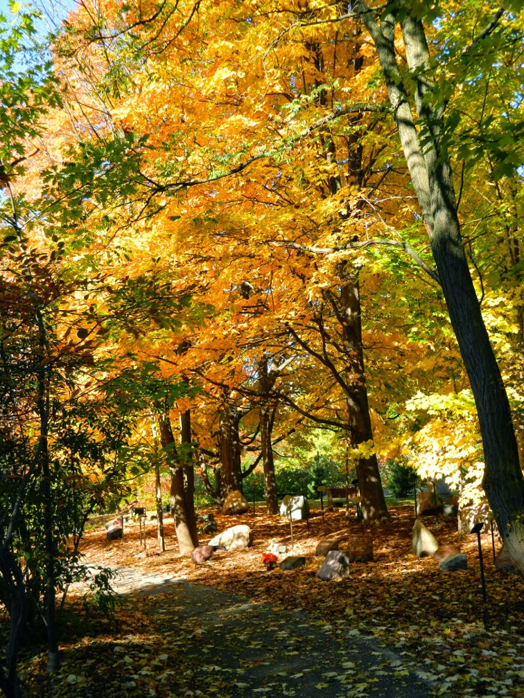 Mount Pleasant Cemetery Forest of Remembrance autumn foliage by garden muses-not another Toronto gardening blog