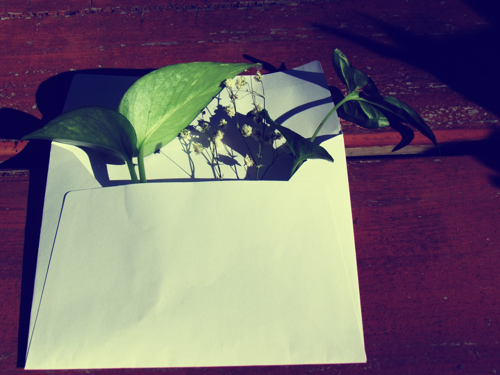 A nature in an envelope with green plant leaves and wildflowers in bloom, natural recycled materials, love notes
