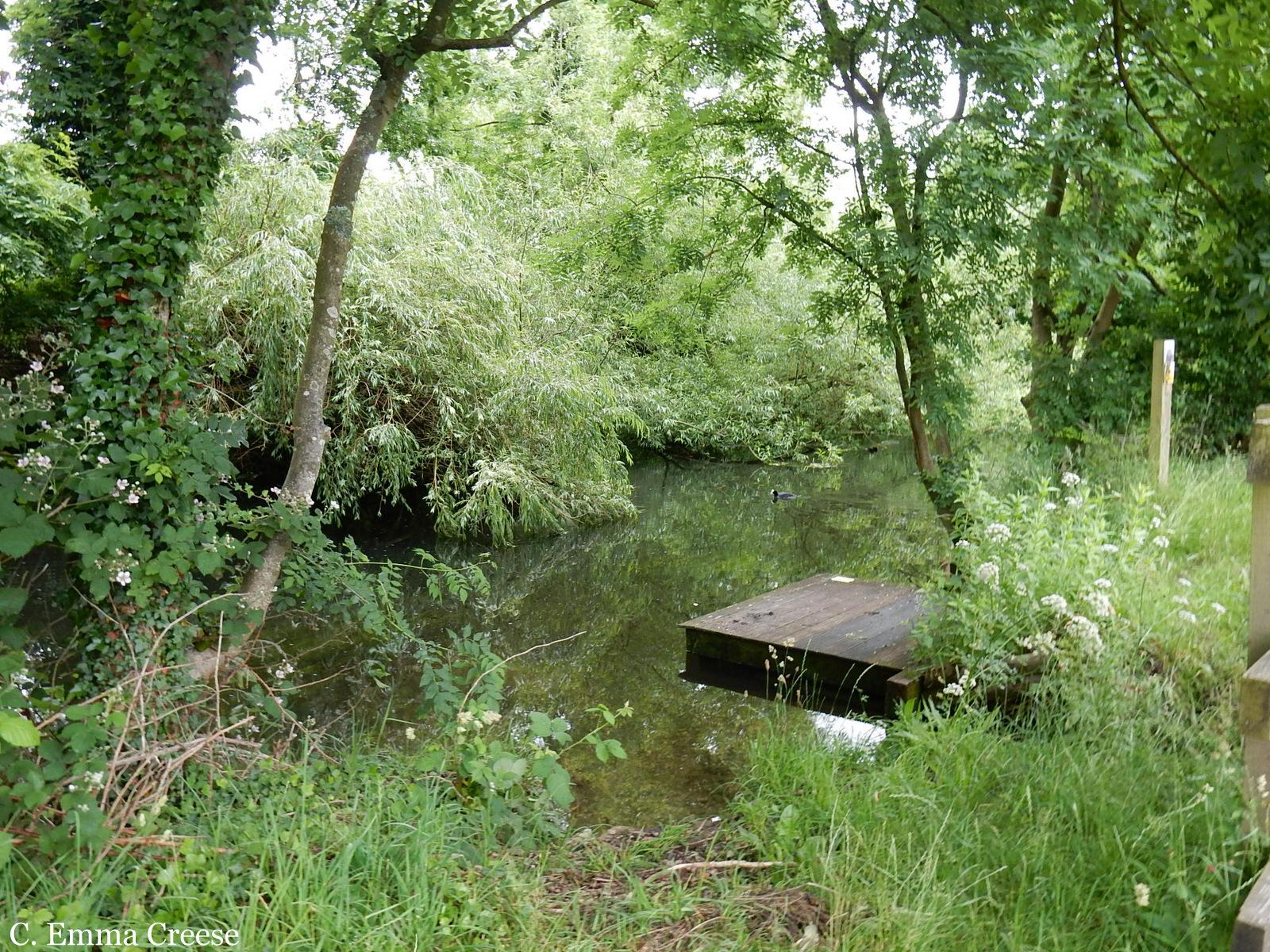 Lost in Denham Forest Buckinghamshire Adventures of a London Kiwi