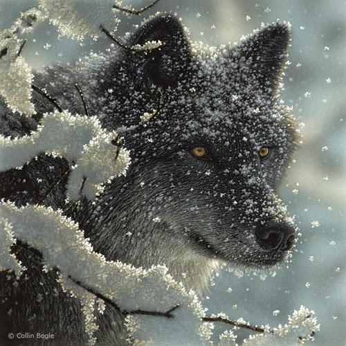 09-Black-Wolf-Collin-Bogle-Animal-Wildlife-in-Art-www-designstack-co