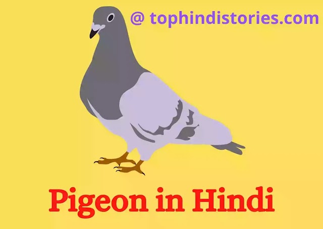 20+ Cool Facts & Information about Pigeon in Hindi [Long Essay]