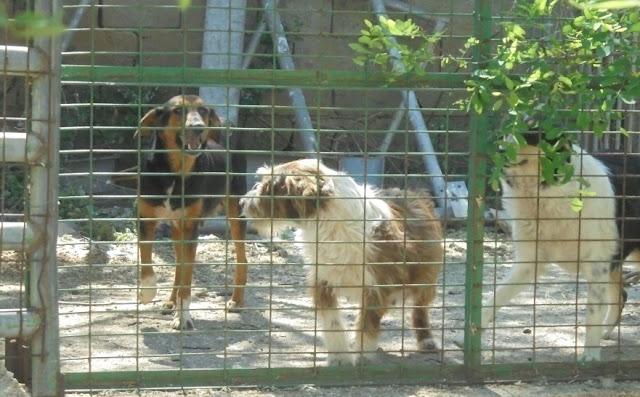 Ήγουμενίτσα: Αναβαθμίζεται το καταφύγιο αδέσποτων ζώων του δήμου Ηγουμενίτσας