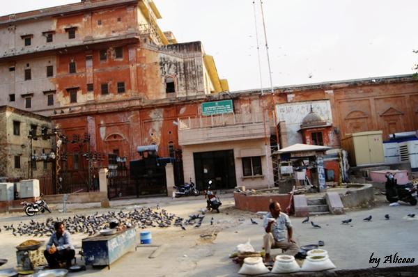 Jaipur-orasul-roz-India