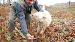 Truffle-Hunting Dogs Find Treasures Worth $2000 a Pound Could Your Dog Join the Hunt?