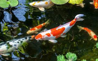 jual bibit ikan tulungagung