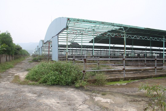 Trang trại chăn nuôi bò của Công ty CP Chăn nuôi Bình Hà tại Hà Tĩnh