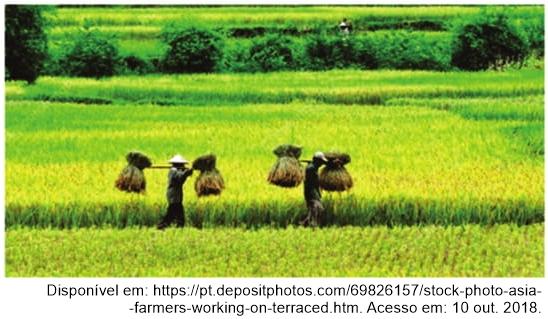 observe a imagem da rizicultura na Ásia