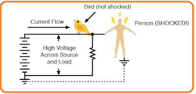 Why birds don't get electrocuted