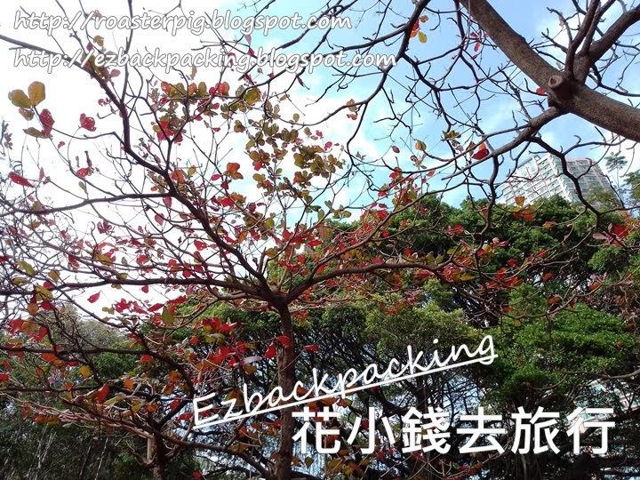 青衣公園紅葉