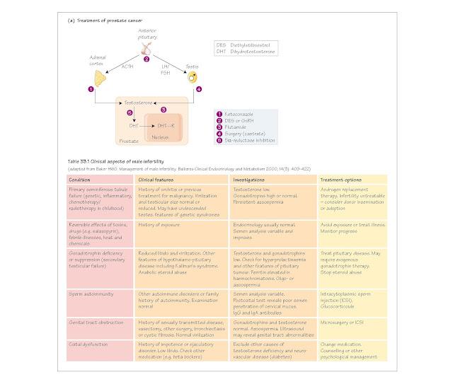 Male Reproduction: III Pathophysiology, Gynaecomastia, Impotence, Prostatic pathophysiology, Benign prostatic hyperplasia,  Prostate cancer,