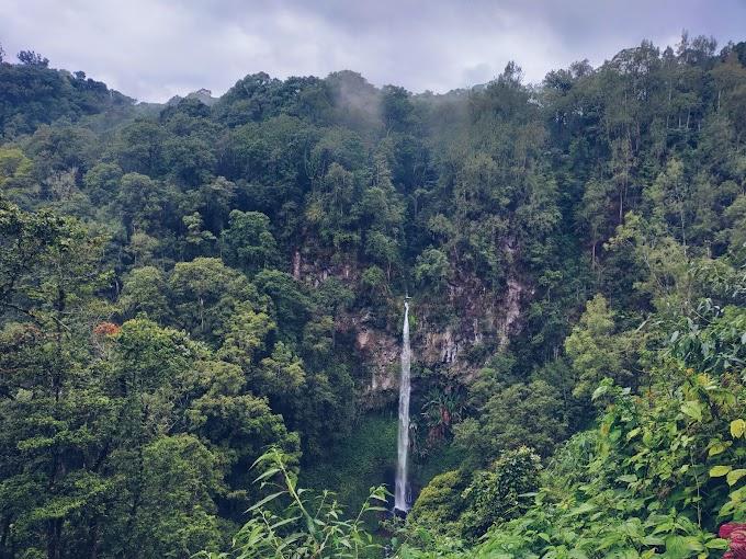 Peran Generasi Muda Menyelamatkan Hutan Indonesia