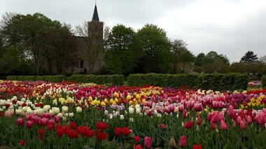 Hortus Bulborum: jardín y museo de bulbos en los Países Bajos