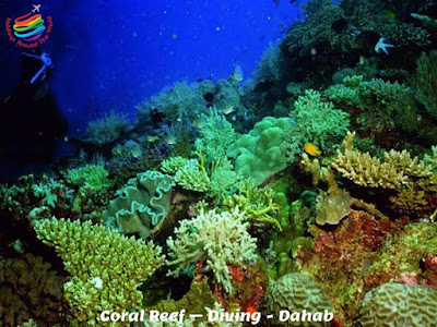 Coral Reef – Diving - Dahab - Egypt