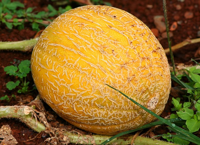 35 Weeks Pregnant Baby Size Cantalopue