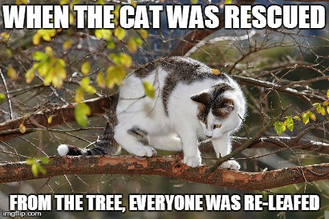 When the cat was rescued from the tree, everyone was re-leafed.