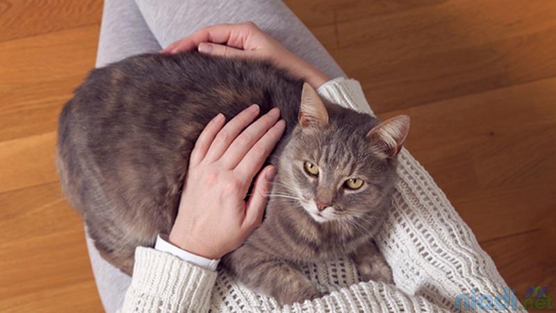arti kucing duduk di pangkuan kita