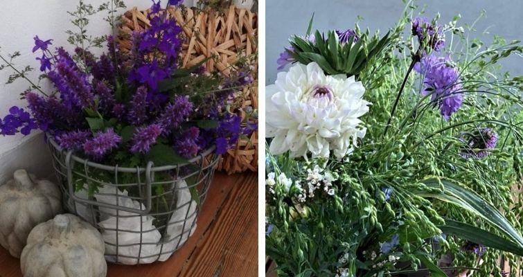 Gartenblumen in Lila