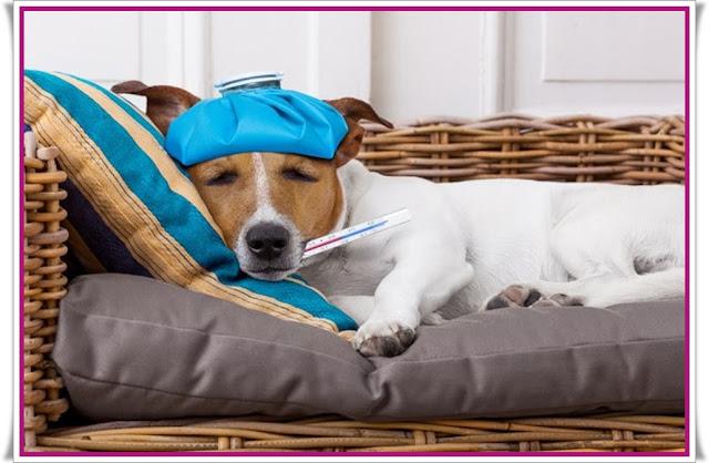 Meu pet está doente,como perceber se seu pet está doente, cachorros, gatos, cães, cães saudavéis, gatos com vermes, cachorro com vermes,Pet com sintomas,Pet