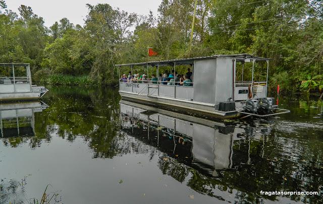 Passeio de barco no pântano da Luisiana, Estados Unidos
