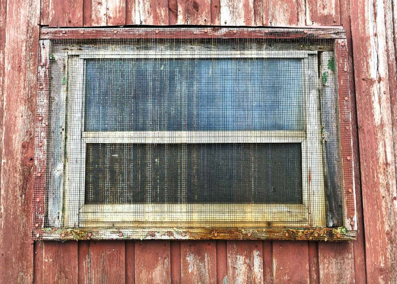 How to Clean Window Screens Like a Pro