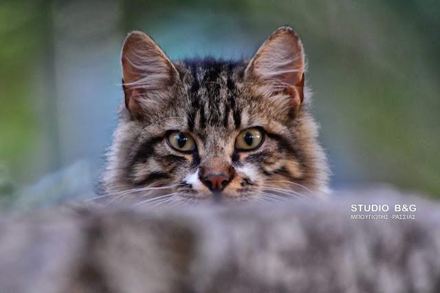 Η φωτογραφία της ημέρας: Η περιέργεια της... γάτας