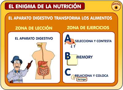 http://www3.gobiernodecanarias.org/medusa/contenidosdigitales/programasflash/cnice/Primaria/Conocimiento/enigma_nutricion/enigma/aparatodigestivo.swf