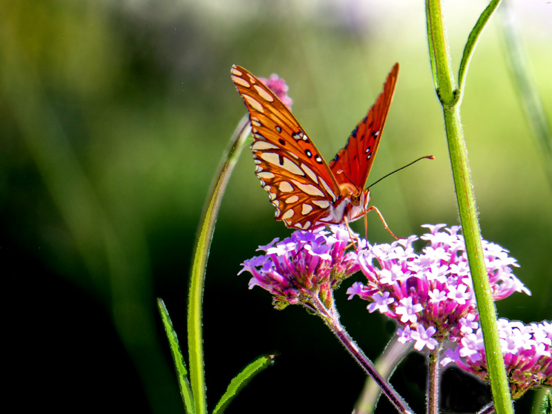 Butterfly on flower - On Flowers is a video by David Ocker