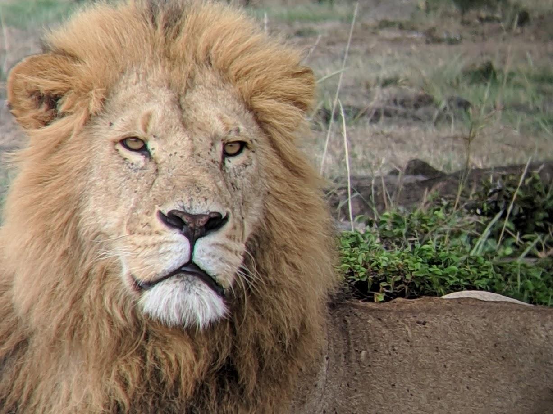 52a3b1c9e Woodland Park Zoo Blog  Lessons from Kenya  Community-Based ...