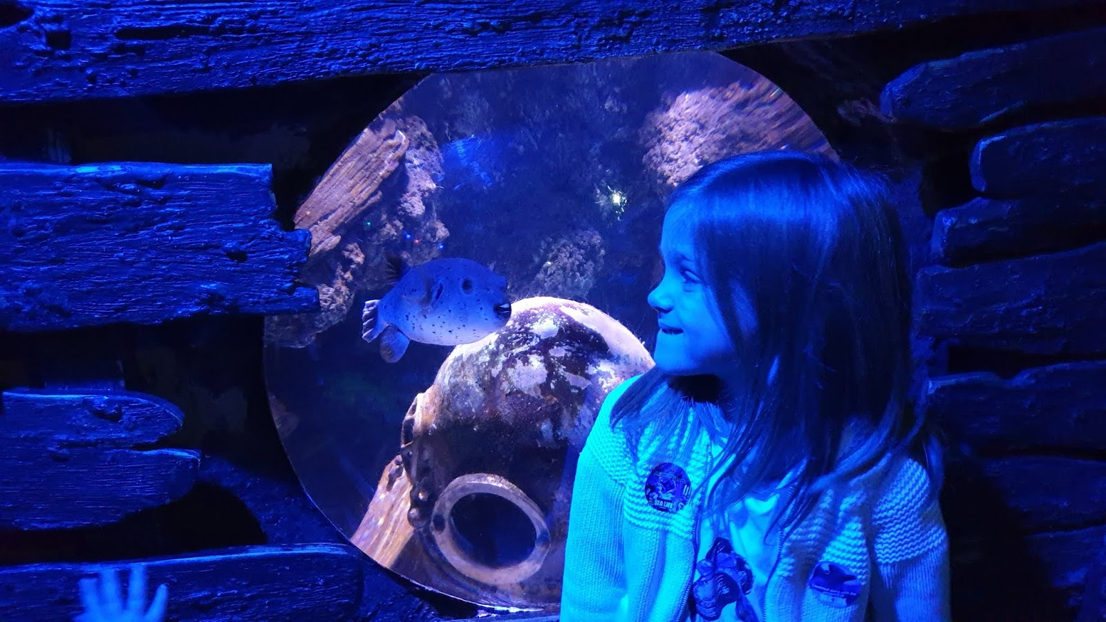 smiling at pufferfish