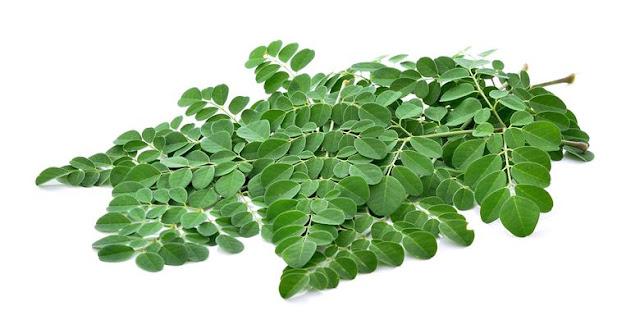 Manfaat daun kelor si pohon ajaib