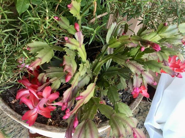 Vaso de plantas com flor-de-maio e alecrim