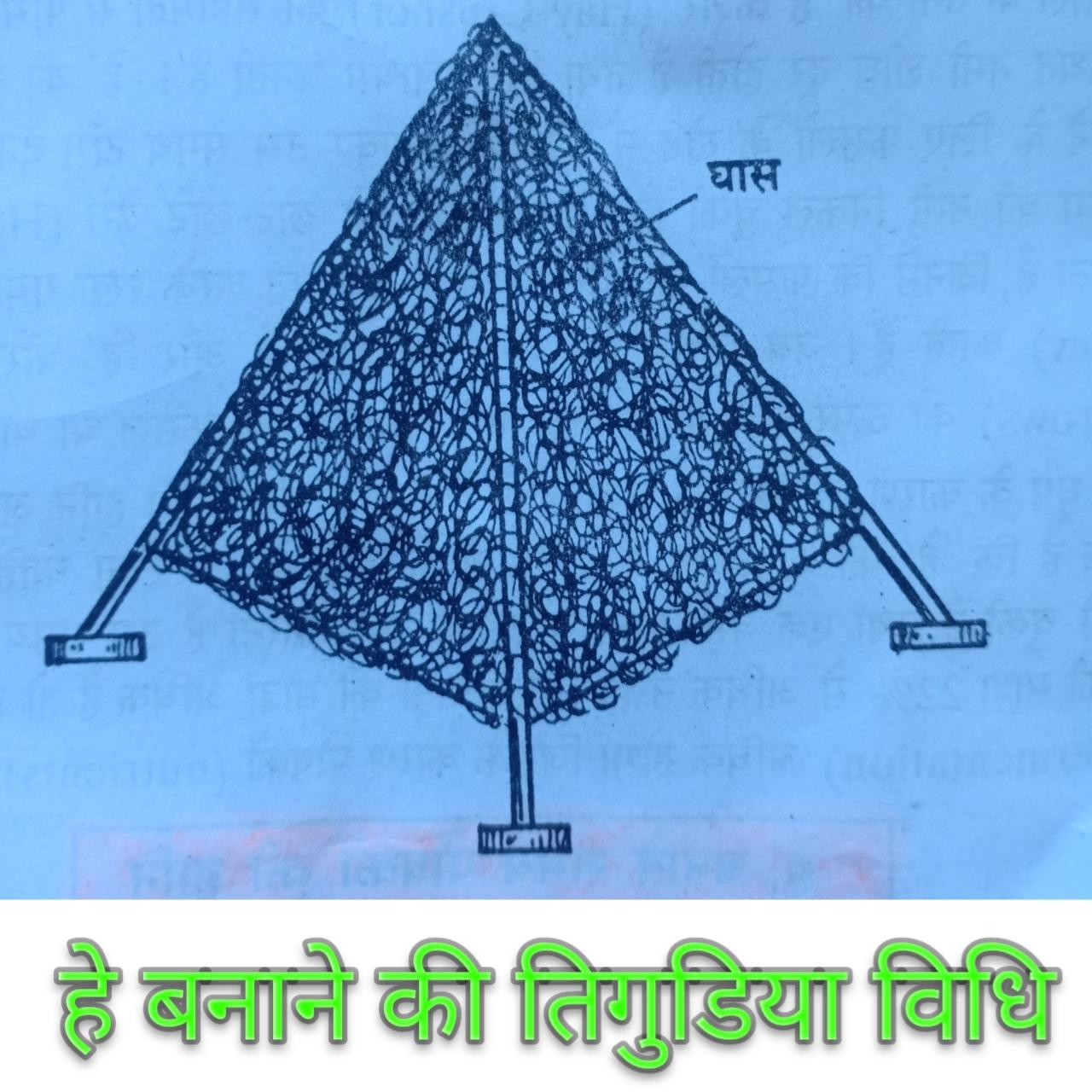 हे Hey या सूखी घास क्या होती है पूरी जानकारी हिंदी में, हे Hey या सूखी घास की परिभाषा
