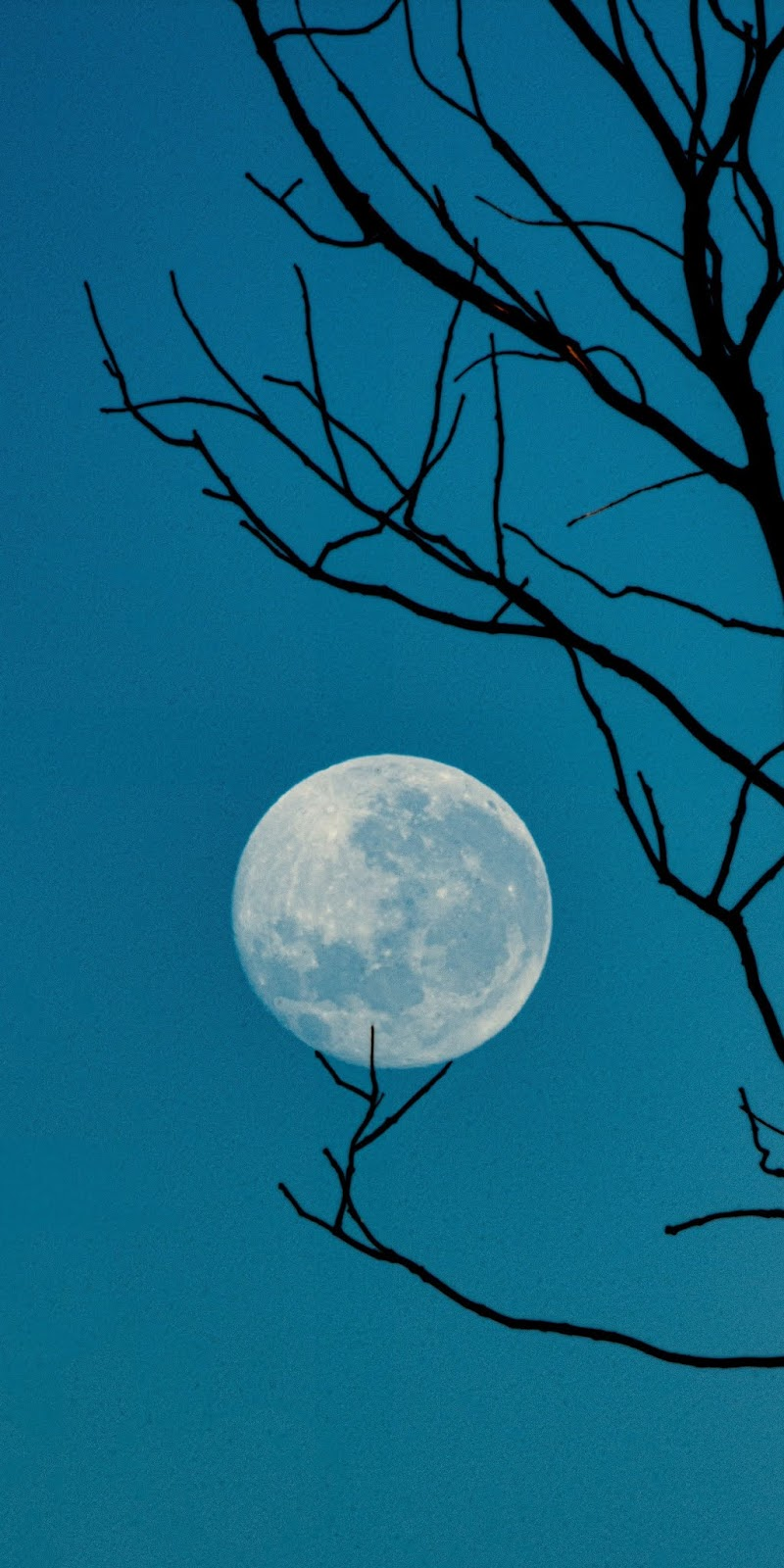 Full moon in blue night