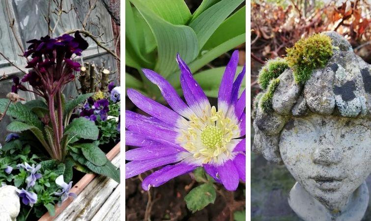 Frühlingsblumen in Lila