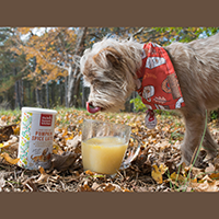The Honest Kitchen Instant Pumpkin Spice Latte for Dogs Review